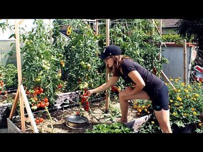 My Preppers Garden (Saving me 1500 Bucks a year)