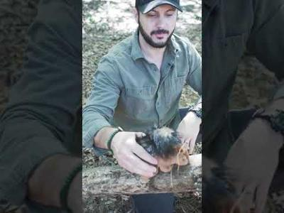 Catch a Squirrel with this Trick