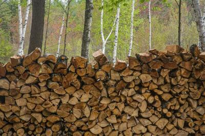 Firewood for Survival – What You Should Know